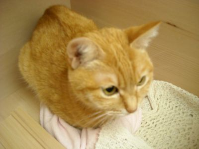 猫&モミBOX1.JPG