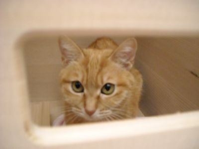 猫&モミBOX2.JPG